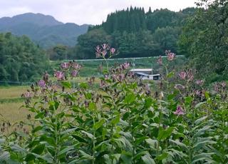 B-aiha-0890.jpg