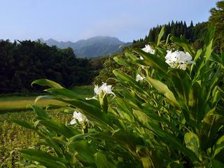 B-hana-70115.jpg