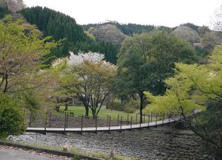 B-hawa-0954.jpg