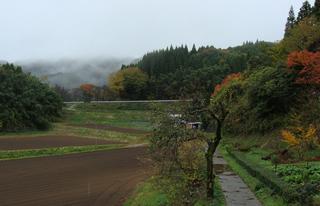 B-momiji-4919.jpg